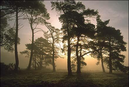 Les 20 plus belles forêts françaises